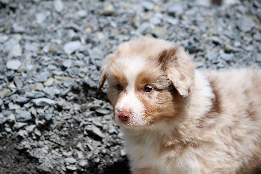 Lustige Hunde Videos – witzige Videos von Hunden die ich mag